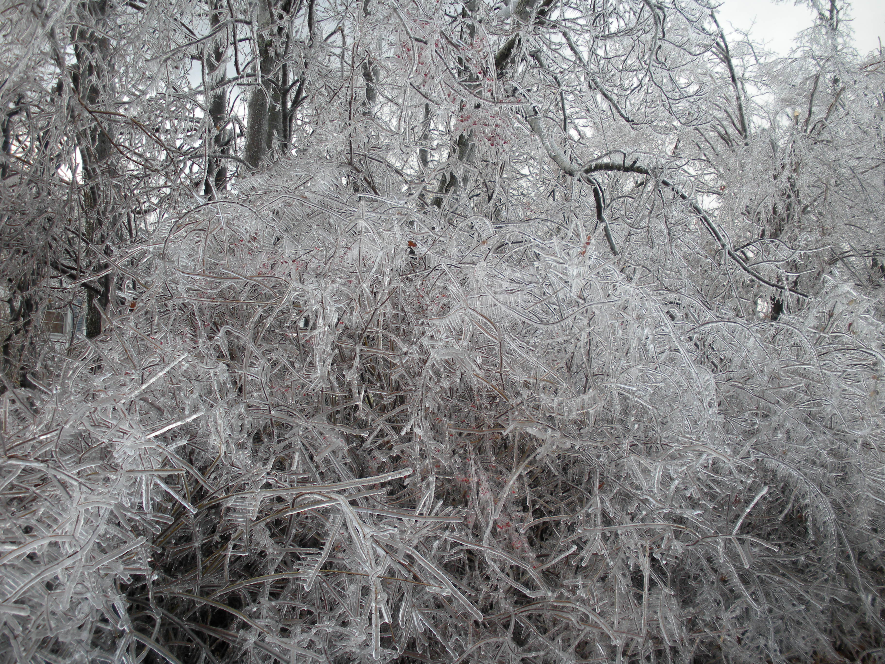 Crystalized tree during a serious icestorm.....
